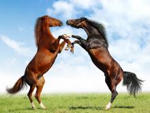 άλογο, μαύρο άλογο, άσπρο άλογο, ονειροκρίτης,