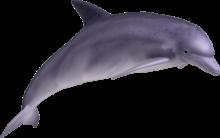 δελφίνι, ονειροκριτης