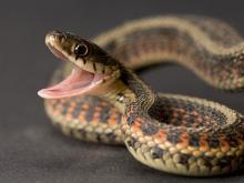 φίδι φίδια ονειροκρίτης
