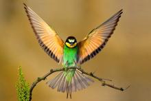 ονειροκρίτης πουλιά