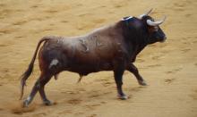 ονειροκρίτης, ταύρος,