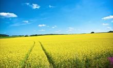 χωράφι, καλλιέργεια,